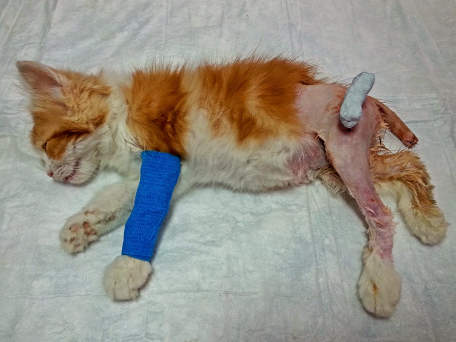 tie-in femur gato