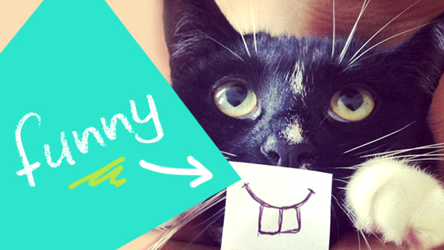 Who Rules the Internet: Cats or Dogs? #infographic #socialmedia #contentmarketing with pets