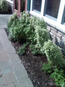 Nate's Herb Garden