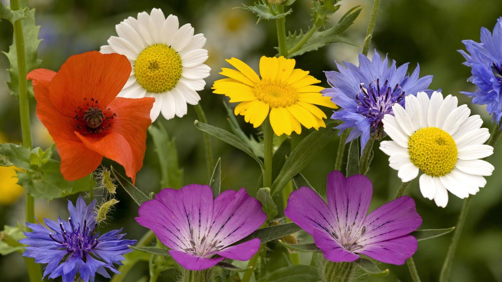 http://2.bp.blogspot.com/-NT4I7tz6woM/Tdlkl_THDJI/AAAAAAAAQKI/xP_QhI_HbUw/s1600/flowers-wallpaper-150.jpg