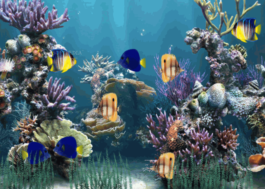 Animated aquarium wallpaper for Moving fish wallpaper