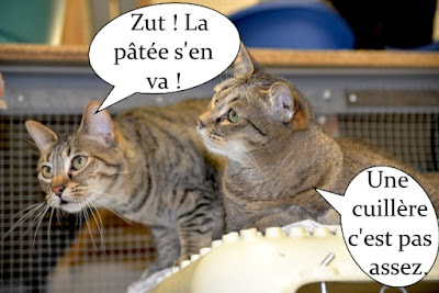Deux beaux chats gris regardent la pâtée s'éloigner avec dépit.