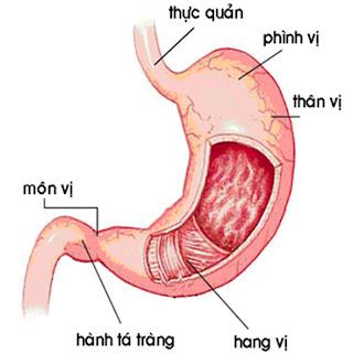 viêm hang vị | hang vị xung huyết