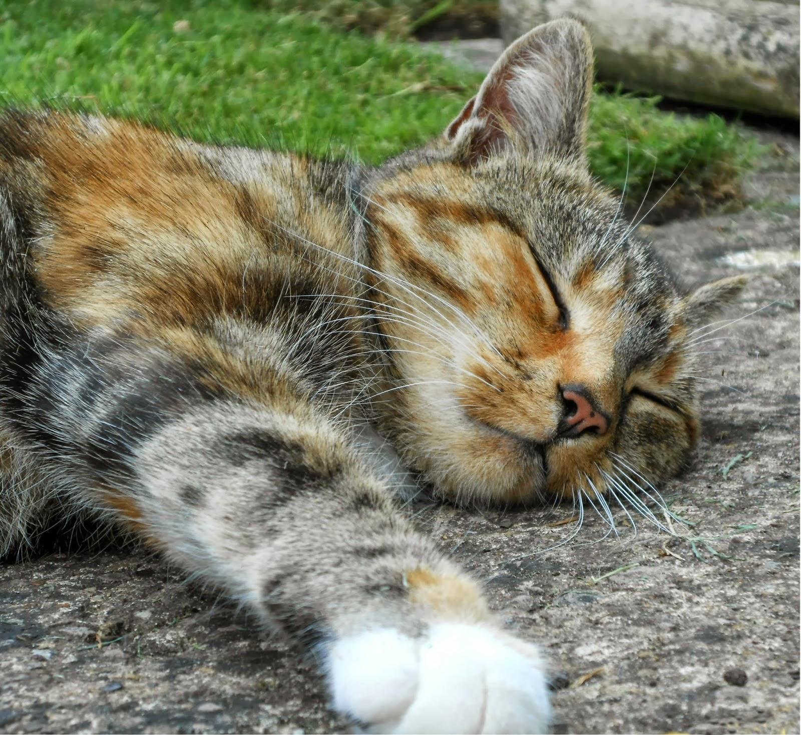 Beautiful Cat Sleeping Copyright