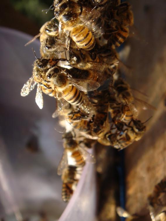 Tem um pouquinho de mel??