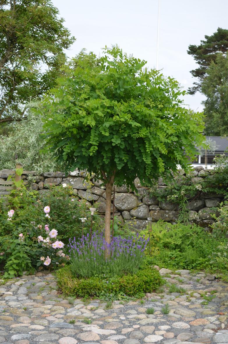 Kungsbacka trädgårdsdesign: bilder från min egna trädgård