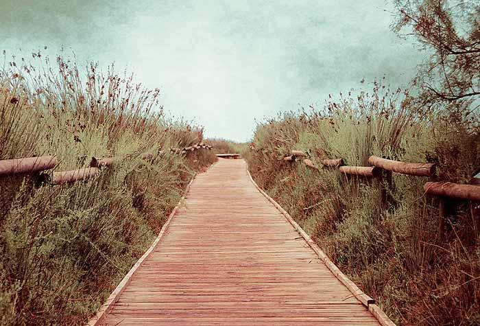 prado, camino, derecho, paisaje, nublado, pasto, flores, puente, madera