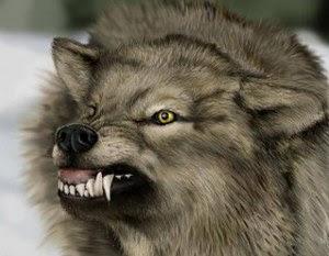 tipos de homens o lobo