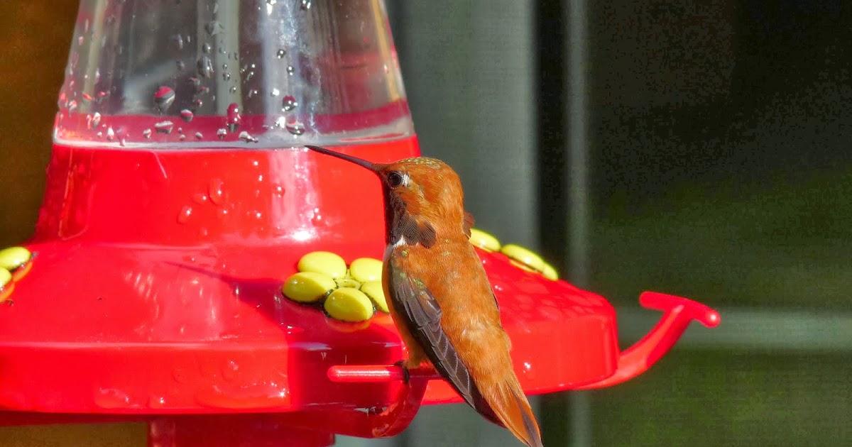Gabriola Bird Blog Birds Of Puerto Vallarta