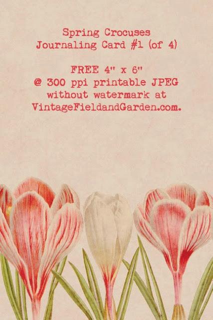 http://2.bp.blogspot.com/-NUTMg4DFPtw/U0wXHNLxtsI/AAAAAAAAIpA/1Lv5nn1TwBY/s640/Spring+Crocuses+Journaling+Card+1B+Preview.jpg