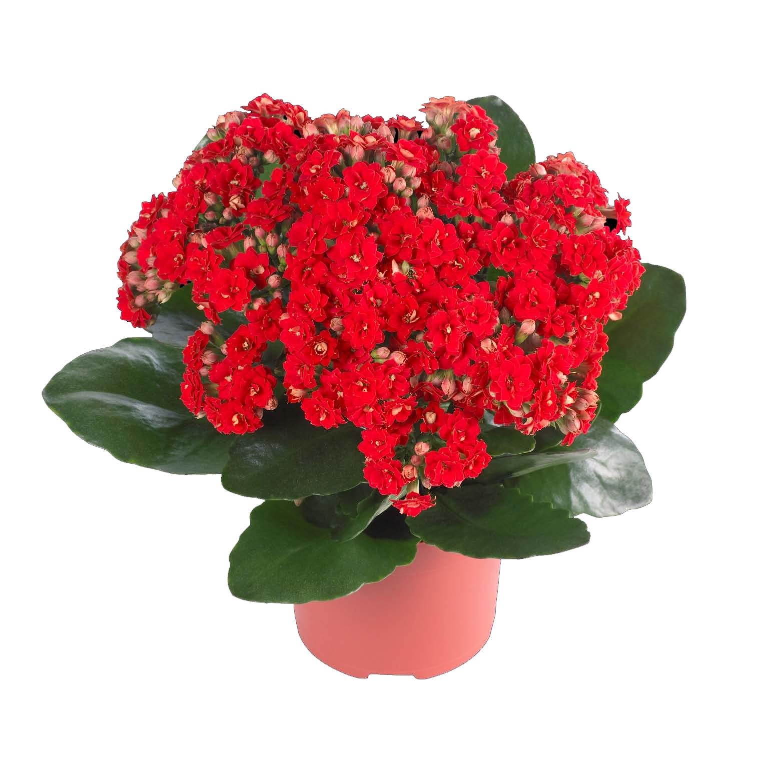Полезные растения  Целебные свойства растений Floretsru