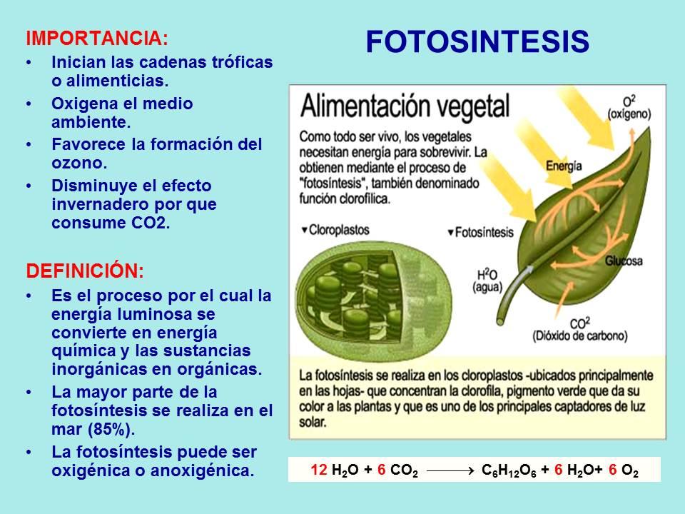 Funcion del dixido de carbono en la fotosintesis 60