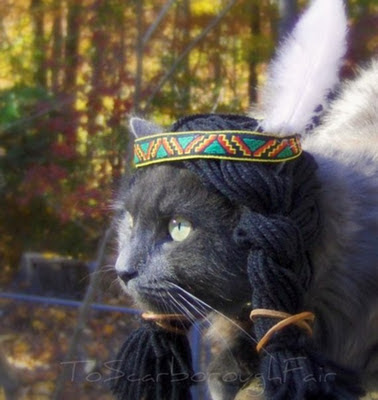 A cat dressed in Native American costume