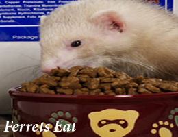 pet stores lot of food variety for ferrets