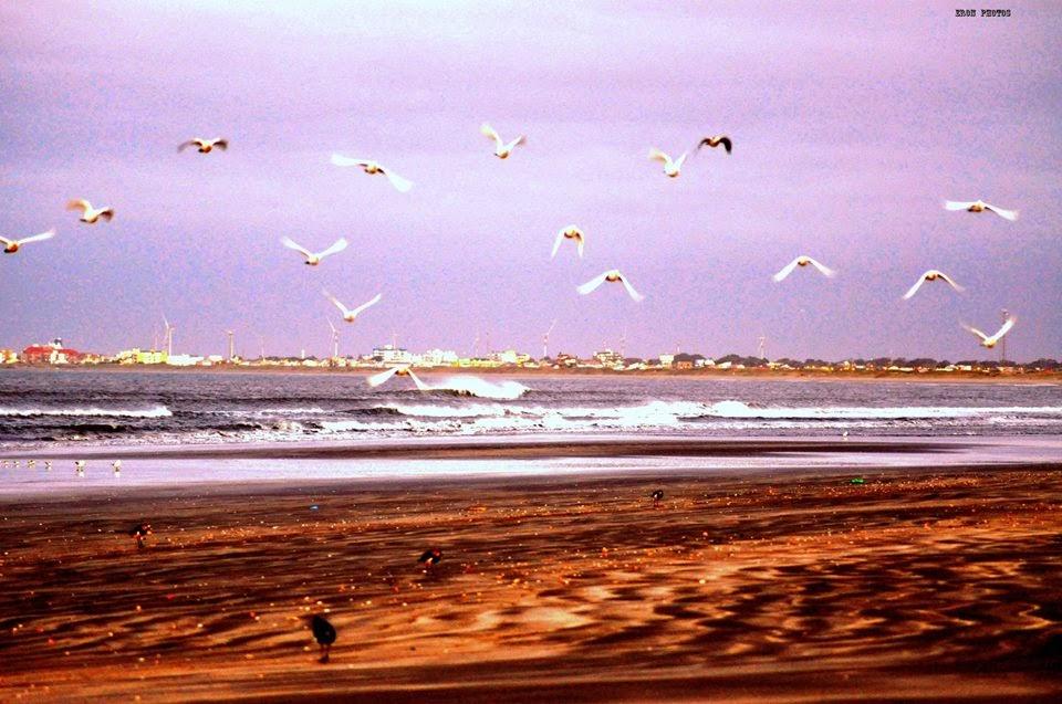 Pássaros na Praia do Cassino