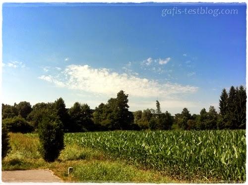 Bayerische Landschaft mit Maisfeld