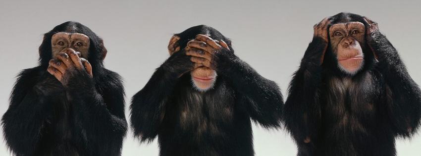 http://2.bp.blogspot.com/-NWW4CuN1afY/T0pRGgzESsI/AAAAAAAAASE/aOAGd8oYuxk/s1600/funny-monkey-wallpaper.jpg