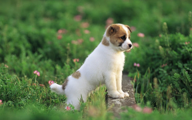 Cute Dog Puppy 30