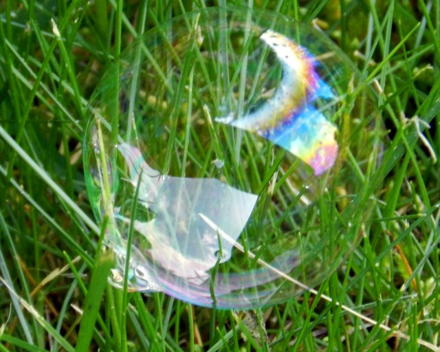 Blue Country Magic: Bubbles in the Grass