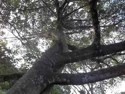 Árvores, troncos, folhas