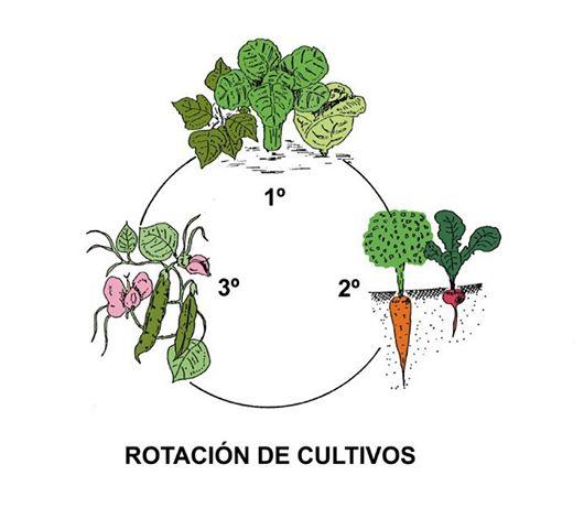 ejemplo de rotación de cultivos