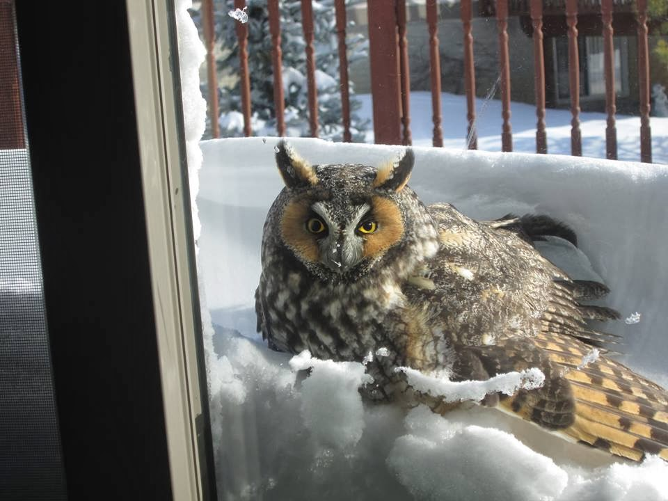Funny animals of the week - 17 January 2014 (40 pics), owl at the window