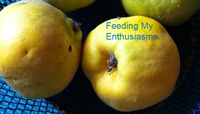 Feeding My Enthusiasms
