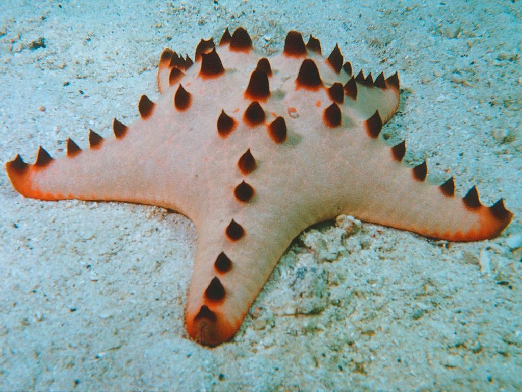 amazing african animals amazing stars and starfish