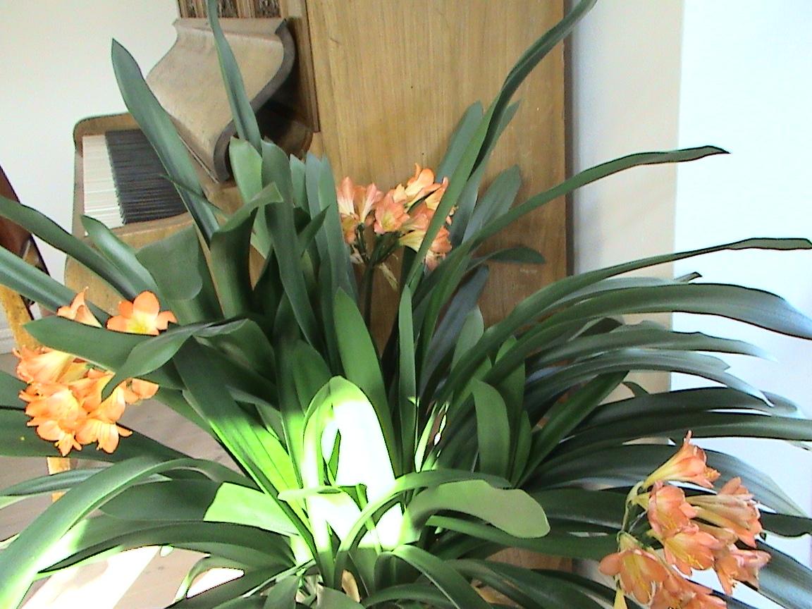 Birgitte p? nettet: Stueplanter