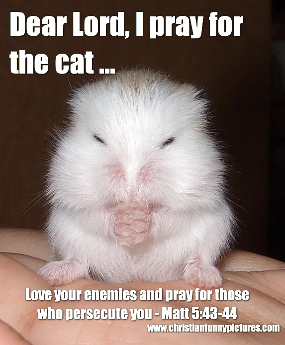 Mouse+pray+for+the+cat.png