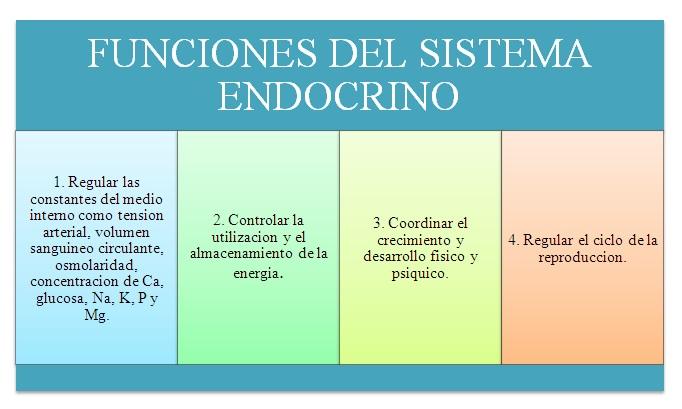 MANUAL DE PSICOFISIOLOGIA UNICUC: SISTEMA ENDOCRINO