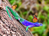 Mariposas - Buterflies