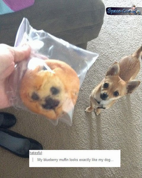 funny muffin dog picture