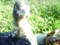 Salvataggio di 2 pulcini; io, i 2 pisquanini e il fidanzato al lago dei cigni-).