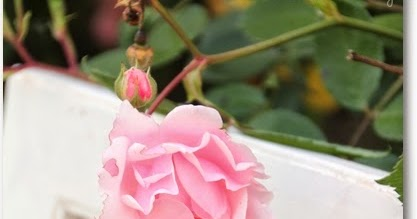 3 verified David Austin Roses coupons and promo codes as of Dec 2. Popular now: Sign Up for David Austin Roses Email Newsletters and Receive Exclusive Offers. Trust devforum.ml for Flowers savings.