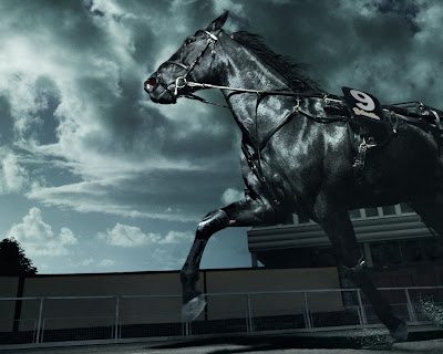 Black Horse Horse Black