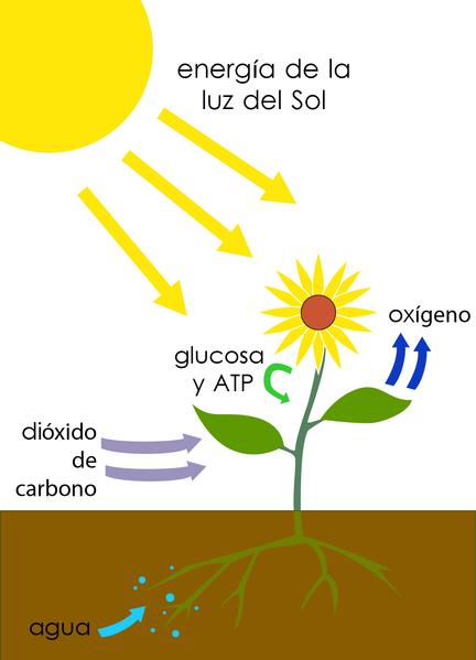 Las plantas saben matematicas | Hoy me enteré de...