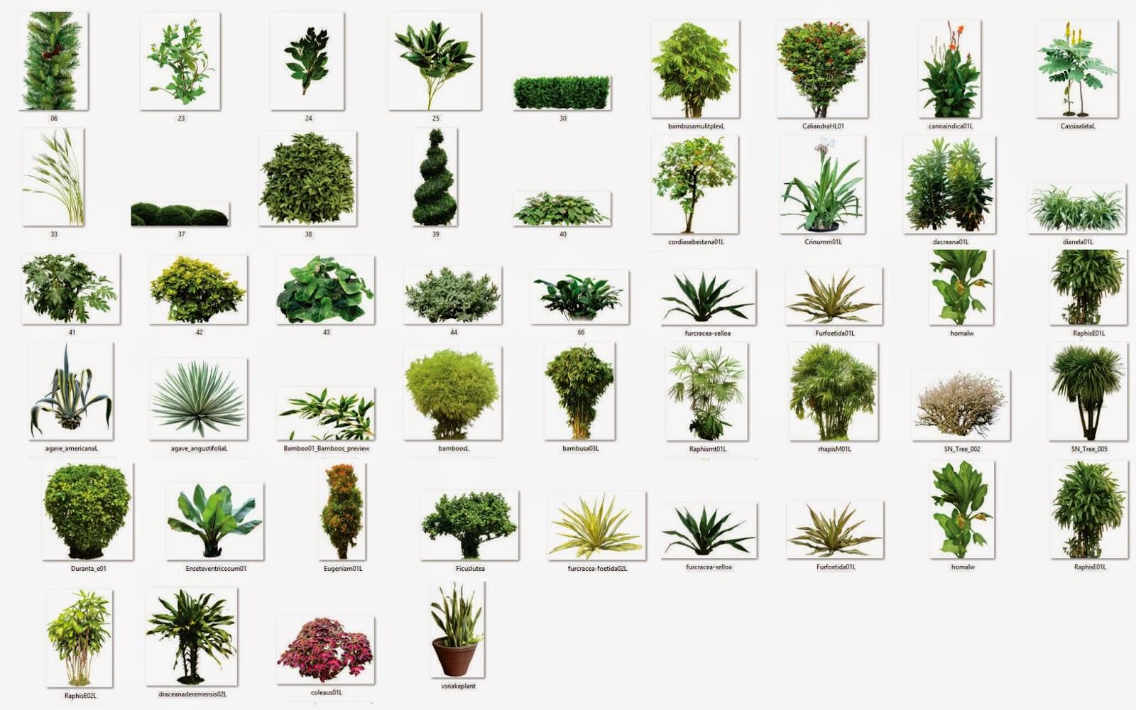 Rboles con fondo transparente png arq recursos - Nombres de arbustos ...