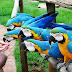 Parque aquático, de diversão e agora animal: Thermas dos Laranjais inaugura Zoológico