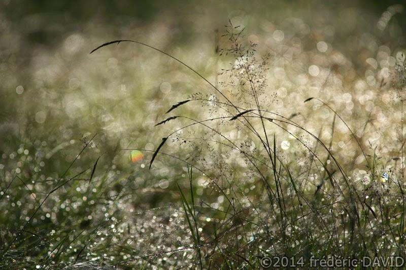 matin rosée gouttes forêt Fontainebleau
