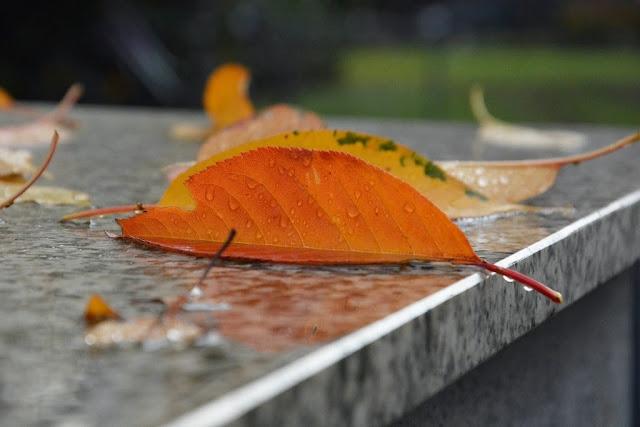 Herbst, Autumn, Photography, Xenia Metelski