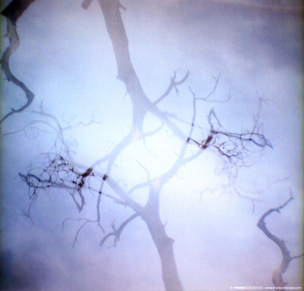 ramas de arbol en doble exposicion
