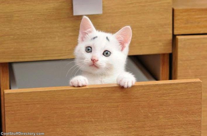 'Embarrassed Kitten' - The New Star of the Internet