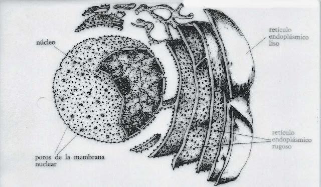 Reticulo endoplasmatico y biologia celular