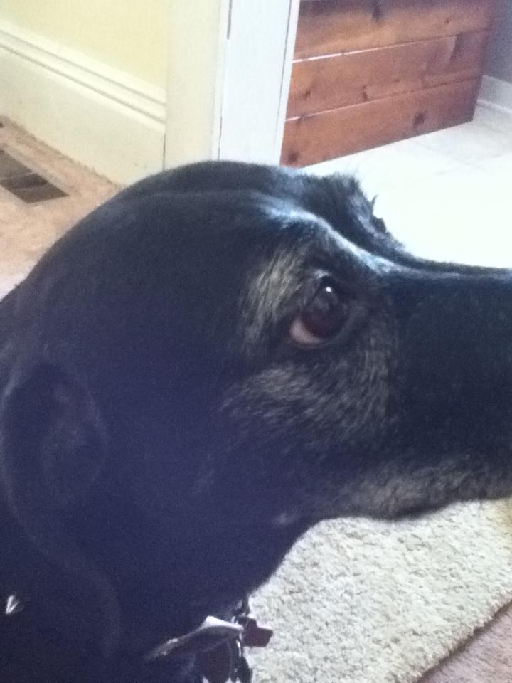 Shelly S Dog Training