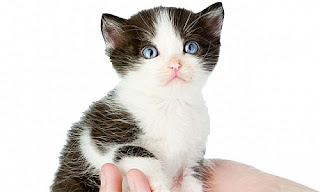 Caring for Pet cats, Caring for kittens, kittens in, kitten, cat