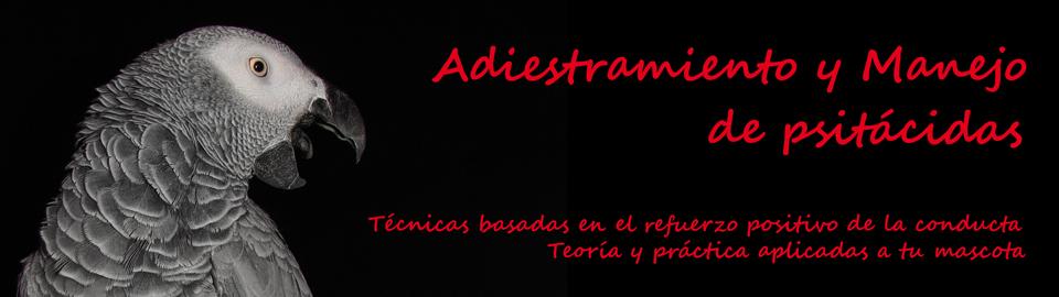 ADIESTRAMIENTO Y MANEJO DE LOROS