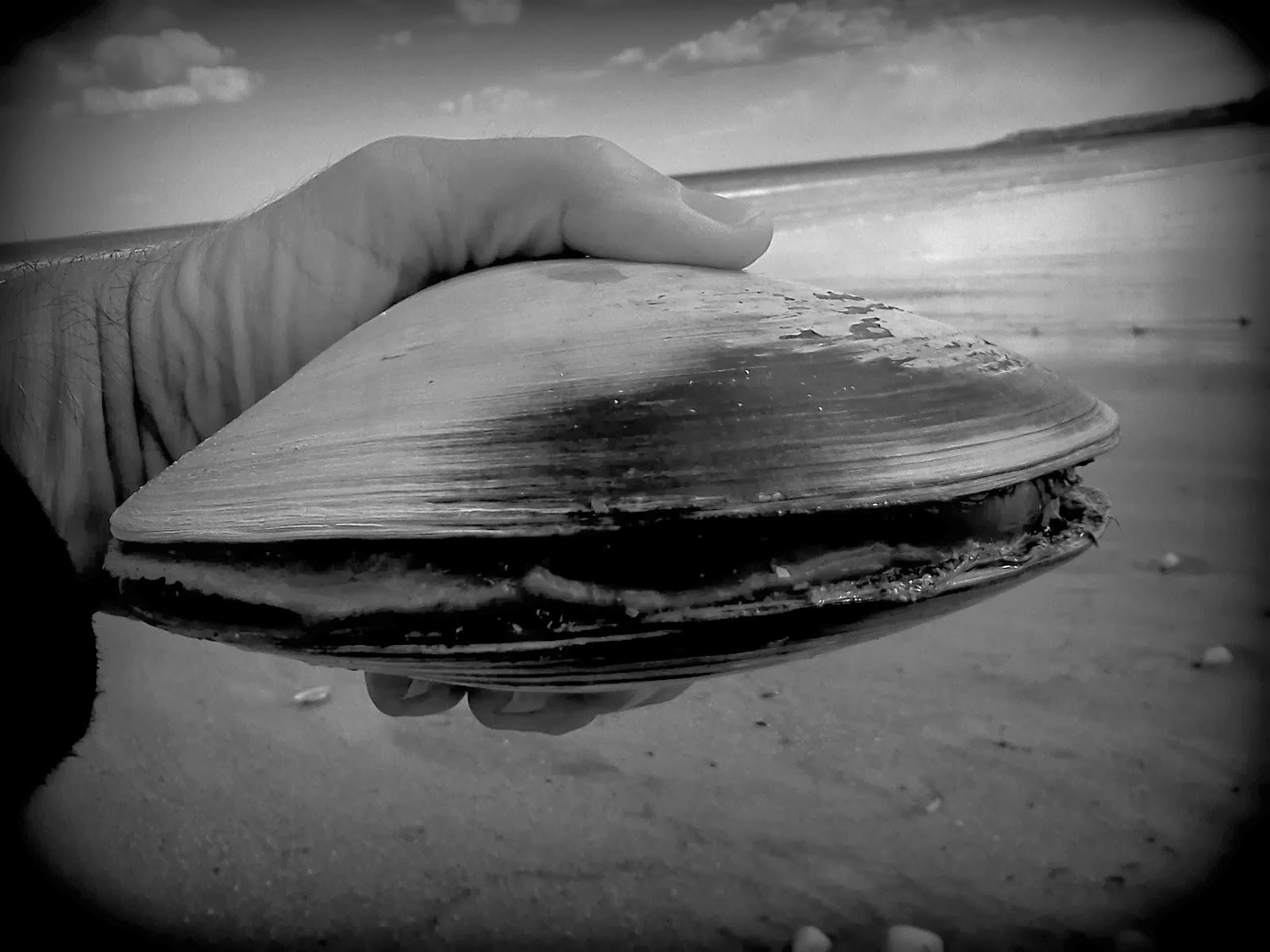 океанский венус, моллюск, самое старое существо на земле