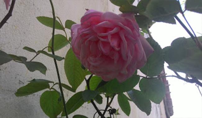 Foto tirada pelo Zenfone 5