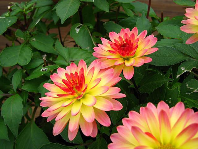 Sonbaharda Açan çiçekler Bahçe Ve Peyzaj Malzemeleri